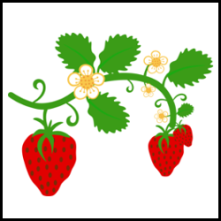 strawberry with leaves and flowers vector